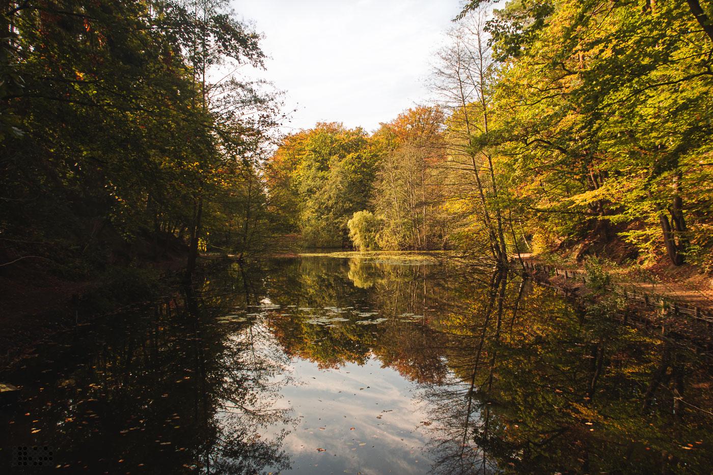 Teich im Herbstwald. Eine Insel spiegelt sich im Wasser. Die Blätter haben bunte Herbstfarben.